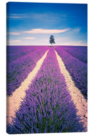 Canvas  Lavender field with tree in Provence, France