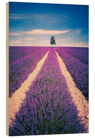 Wood print  Lavender Field with tree in Provence, France