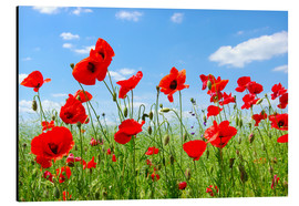 Aluminium print  Red poppies in green field