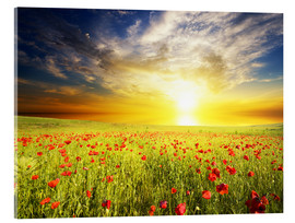 Acrylic print  Field with green grass and red poppies