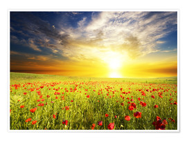 Premium poster  Field with green grass and red poppies