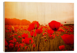 Wood  red poppies in misty dayspring