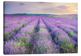 Meadow of lavender on sunset