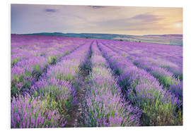 Foam board print  Lavender Meadow at sunset