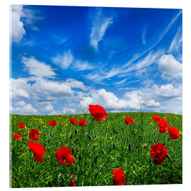 Acrylic print  Red poppies on green field