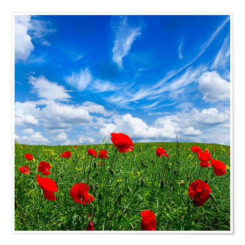 Premium poster Red poppies on green field