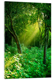 Acrylic glass  Sunlight rays in the rain forest in Sri Lanka