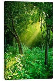 Canvas print  Sunlight rays in the rain forest in Sri Lanka