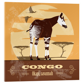 Acrylic print  Congo - Okapi - Kidz Collection