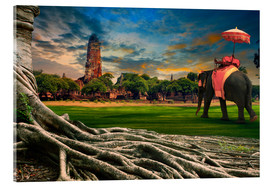Acrylic print  big root of banyan tree and elephant