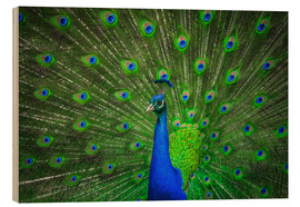 Wood print  beautiful peacock with feathers