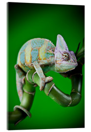 Acrylic glass  green chameleon on bamboo