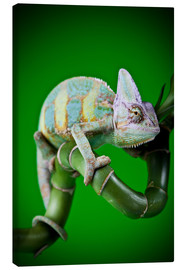 Canvas  green chameleon on bamboo