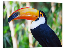 Canvas print  Giant toucan in Brazil