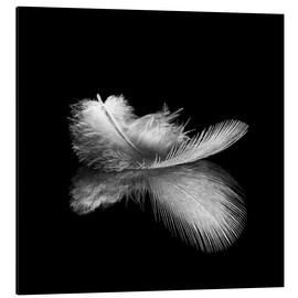 Aluminium print  Light as a feather