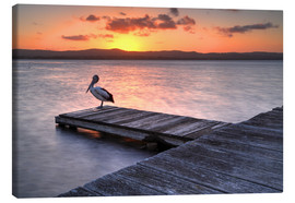 Canvas print  A pelican resting on the lake Tuggerah