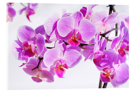 Acrylic print  Beautiful pink-magenta orchid