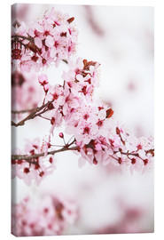 Canvas  flowering fruit tree