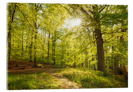 Acrylic print  Spring forest with sunshine - Oliver Henze
