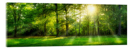 Acrylic print  Forest panorama in summer - Jan Christopher Becke