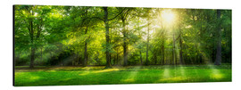 Jan Christopher Becke - Forest panorama with sunbeams in summer