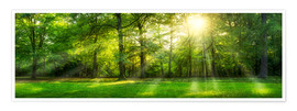Premium poster  Forest panorama in summer - Jan Christopher Becke
