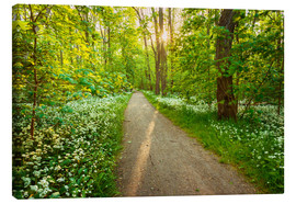 Canvas print  Wild Garlic Forest - Dave Derbis
