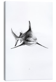 Canvas print  SharkIII - Alexis Marcou