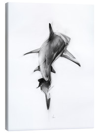 Canvas print  Shark II - Alexis Marcou