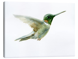 Canvas print  Hummingbird - Verbrugge Watercolor