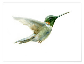 Premium poster  Hummingbird - Verbrugge Watercolor
