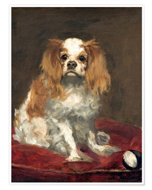 Premium poster A King Charles Spaniel