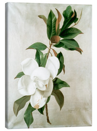 Canvas print  magnolia - Adolf Senff