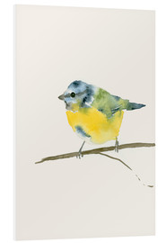 Foam board print  Blue tit - Dearpumpernickel