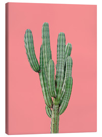 Canvas print  Cactus in pink - Finlay and Noa