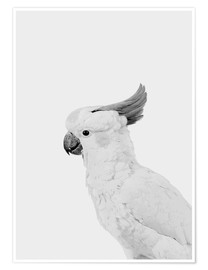 Premium poster  Feathered rebel - Finlay and Noa