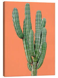 Canvas print  Cactus in Orange - Finlay and Noa