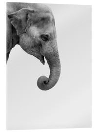 Acrylic print  Gray giant - Finlay and Noa