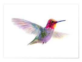 Poster  Hummingbird - Verbrugge Watercolor