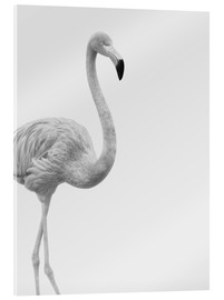 Acrylic print  Black and white flamingo - Finlay and Noa