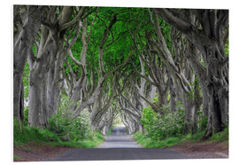 Foam board print  Dark Hedges in Ireland - Dieter Meyrl