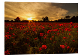 Acrylic print  Poppy field in sunset - Filtergrafia