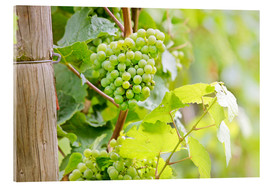 Acrylic glass  Riesling grapes in Rheingau - Christian Müringer