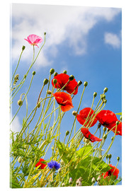 Acrylic print  Poppies into the sky - Edith Albuschat