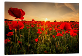 Acrylic print  Poppy field with sunset - Oliver Henze
