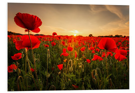 Foam board print  Poppy field with sunset - Oliver Henze