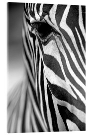 Acrylic print  Face of a zebra