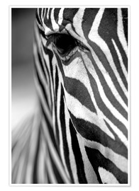 Premium poster  Face of a zebra