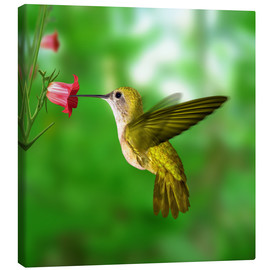 Canvas print  Hummingbird drinking nectar from flower