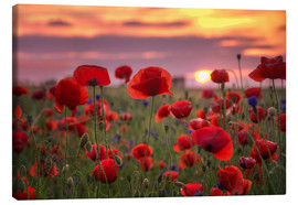 Canvas print  Poppies in sunset - Steffen Gierok